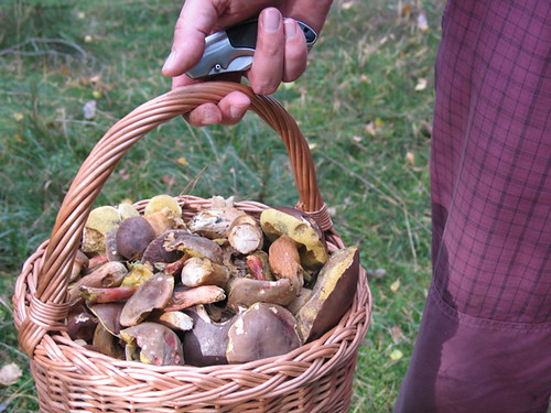 A Full Basket of Mushroomy Goodness