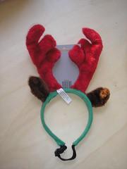 dog's christmas present