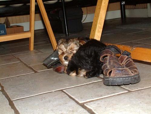 Kaya Likes Sandals