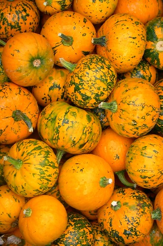 Funky Pumpkins, Or Are Those Gourds?