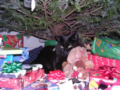 Ares under the tree