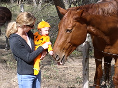 Holden pets big brown horse