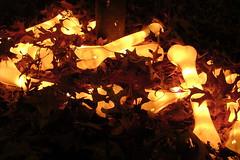 Glowing bones