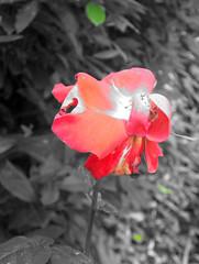fleur,011105