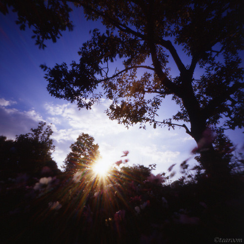 Toward the evening sun