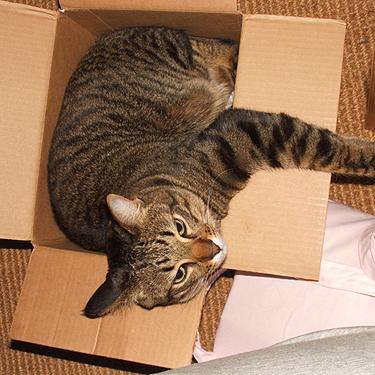 Spud in box
