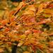 Autumn: 12th Nov