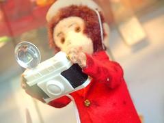 monkey camera2