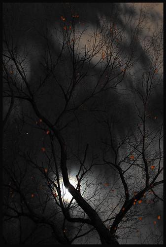 Homenaje a Crepúsculo en Yecla