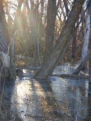 Ice Swamp