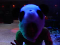 AAH A PANDA!!