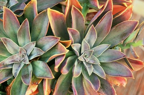 Cactus Plant Thing