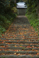 Approach to a shrine of fallen leaf