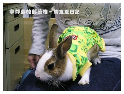 約克夏日記_20060211_穿新衣的約克夏