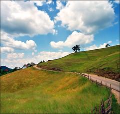 Trees photo by Katarina 2353