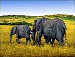 Elephant Parade photo by Ben Heine
