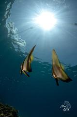 Flying Bats photo by MatYie_00