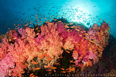 Kaleidoscope - Vatu-i-Ra Channel, Fiji photo by Jim Patterson Photography