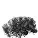 Roma - tree