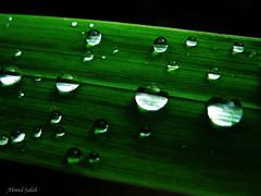 Drops photo by Koamas
