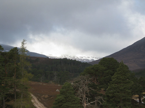 Cairngorms_IMG_2928