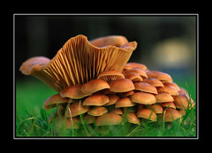 Fungi photo by dirk huijssoon