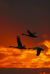 The flight for appreciating evening glow photo by Masashi Sakamoto