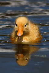 Rubber Duck photo by Roeselien Raimond