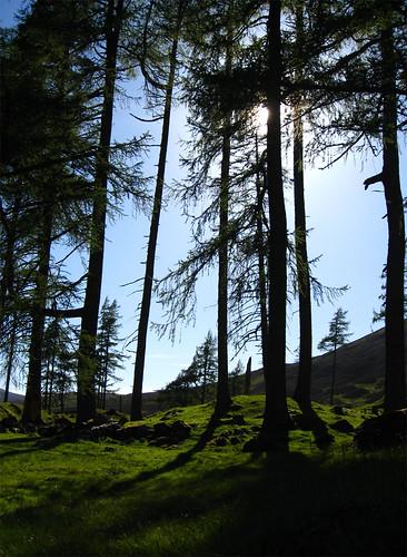 IMG_3082-Trees