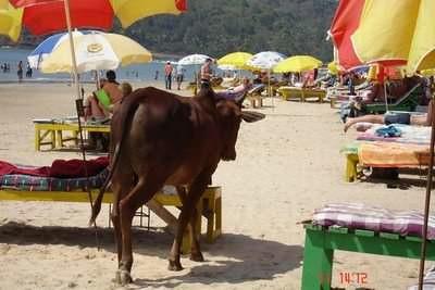 beach-goa-18