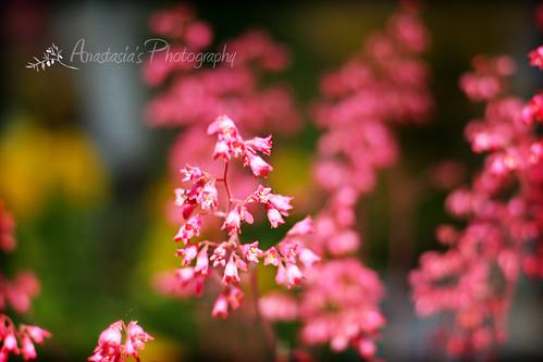 Pretty spring flowers in bloom