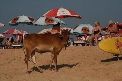 beach-goa-31
