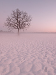 Winter landscape at sunset with fog photo by darko82