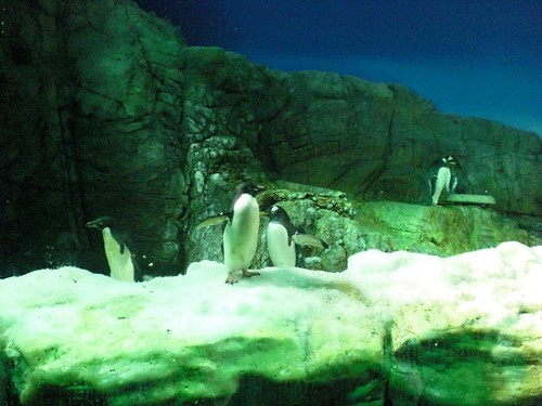 Kaiyukan: Penguins