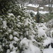 Snowy Garden II