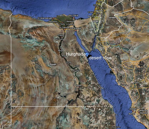 desert rose egypt