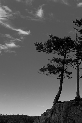 Trees at Deception