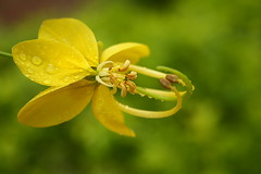 Fresh Green - Yellow Magic photo by AgniMax