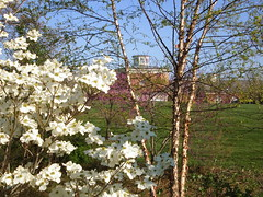 Glimpse of Visitors Center through Dogwood