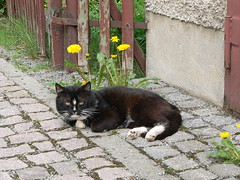 Cat enjoys the beautiful weather photo by abejorro34