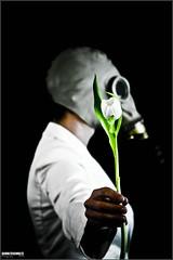 My tulip photo by SchulteSchultz