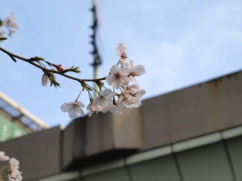 高速と桜 壱