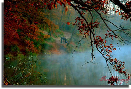 fog and nature... (On Explore : 9 / 2 / 2009 )