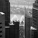 Sydney-6967 © Bart Plessers
