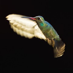 """ Translucent Wings "" photo by Alfredo11"