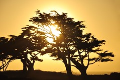 Sunset through the trees at Pacific Grove photo by Images by John 'K'