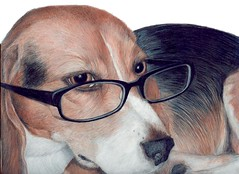 Beagle in Disguise  ( colored pencil) photo by Artist Victoria Watson