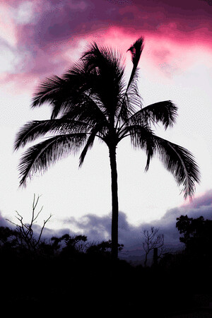 palm-tree-at-sunset.gif