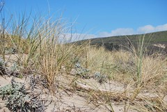 4a. Dune Ecology Photo