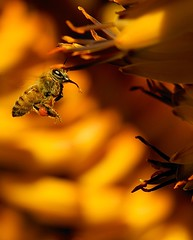 Bee! photo by Danny Perez Photography